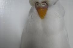 Class 11 Albino 1st