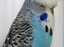 1st Blue