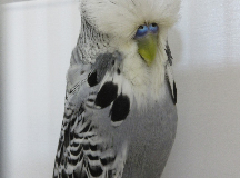 1st Grey