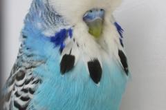 03 Blue 1st