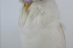 11 Albino 1st