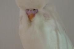 Class 11 Albino - 1st