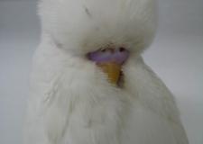 Class-07-Albino-1st